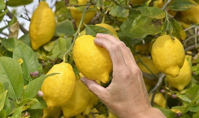 jaki owoc ma najwięcej witaminy c